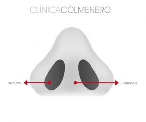 Rinoplastia: Anallisis basal de la nariz ideal